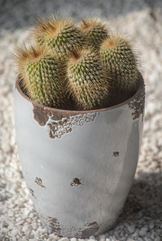 선인장, 가시, 화분, 원 예, 사막의 식물, 가 까이 서, 사진 스튜디오, 샤 프, 척추, 플로 라