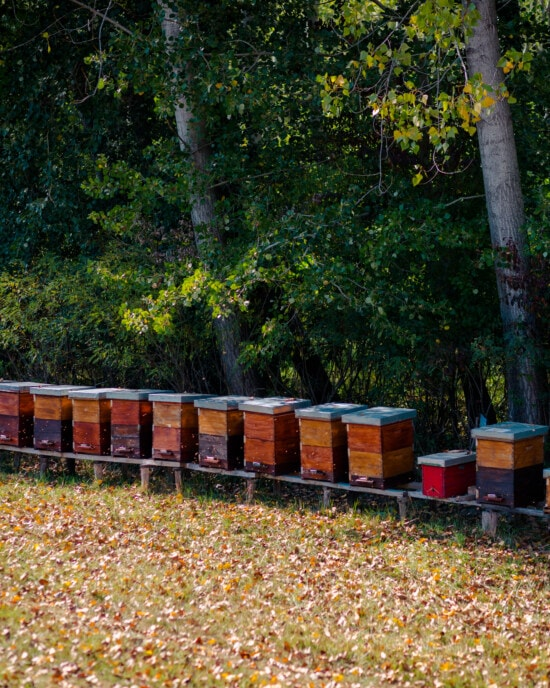 beehive, agriculture, organic, production, honeycomb, bee, pollination, garden, nature, farm