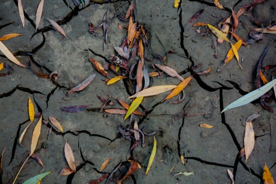 ground, wet, sand, leaf, soil, dry season, nature, texture, abstract, pattern