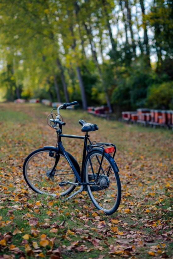 black, classic, bicycle, wheel, cycling, vehicle, outdoors, wood, nature, tree