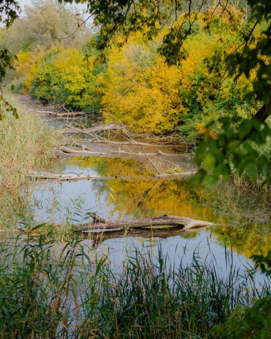 自然栖息地, 沼泽, 湿地, 景观, 秋天, 性质, 水, 植物, 树, 叶