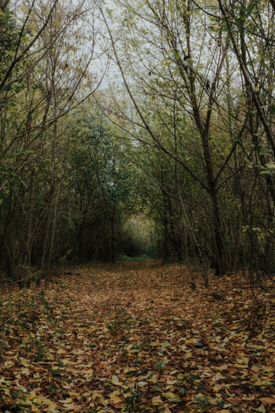 autumn season, forest path, forest trail, october, alley, landscape, majestic, forest, wood, leaf
