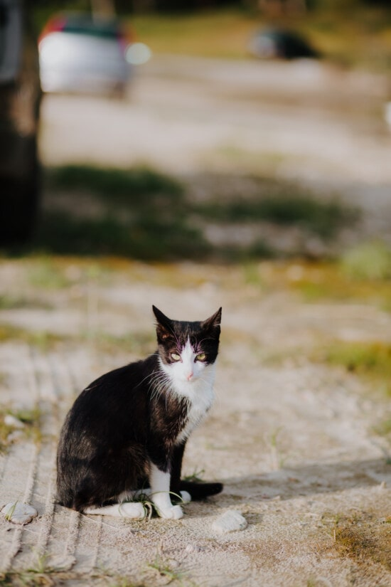 black and white, cat, domestic cat, animal, outdoor, sunny, adorable, kitten, fur, pet