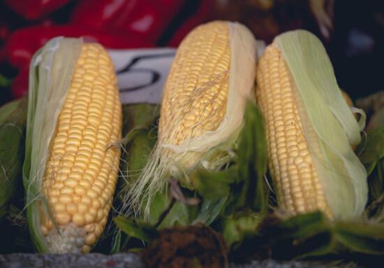 landbouw, maïs, organische, maïskolf, voedsel, zaad, kernel, granen, boerderij, natuur