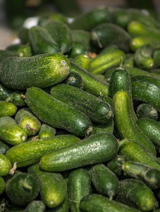 vers, komkommer, organische, donker groen, plantaardige, antioxidant, vitamine C, voedsel, produceren, gezonde