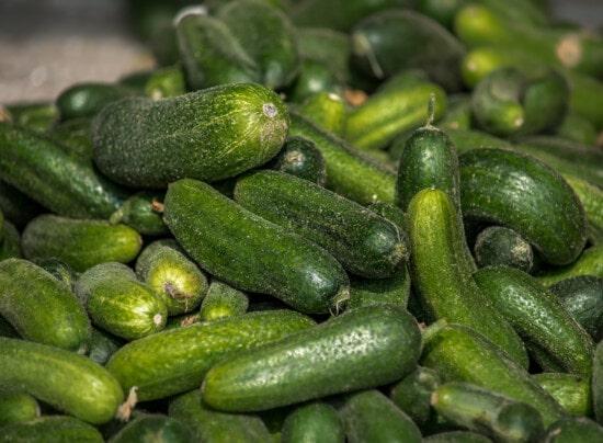 komkommer, organische, voedsel, produceren, vers, natuur, plantaardige, ingrediënten, landbouw, voeding