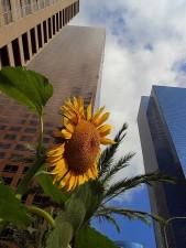 Innenstadt, Angeles, Wolkenkratzer