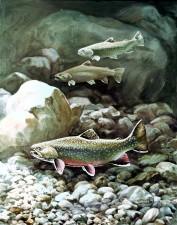 artwork, ruisseau, truite, poissons, poissons, sous-marin