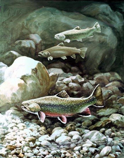 έργα τέχνης, ρυάκι, πέστροφα, ψάρι, ψάρια, υποβρύχια