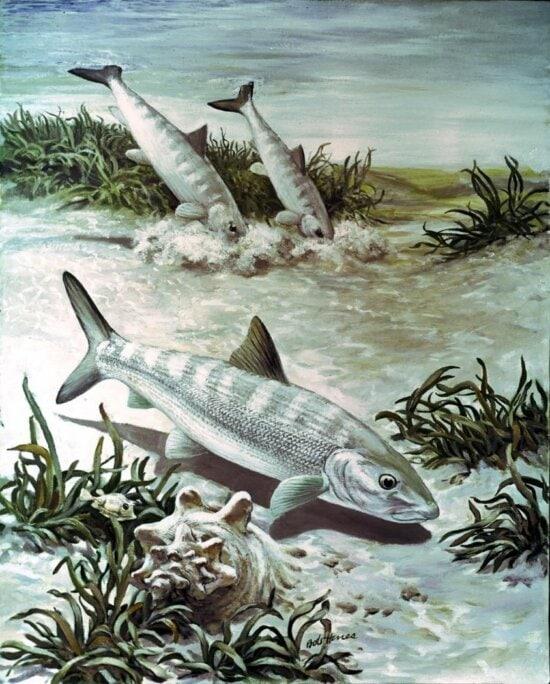 bonefish, art, image