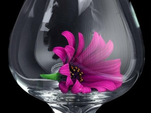 gänseblümchen, Glas, Makro