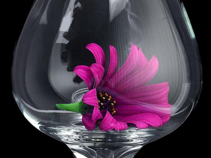 daisy, daisies, glass, macro