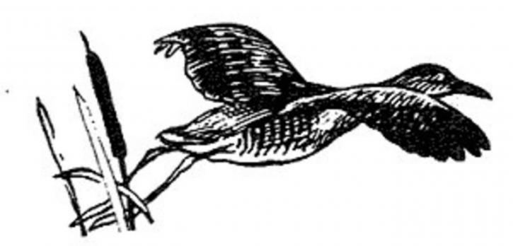 pták, letu, čára, kresba, umění