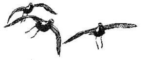Vögel, Kunst, Zeichnung, golden, Regenpfeifer