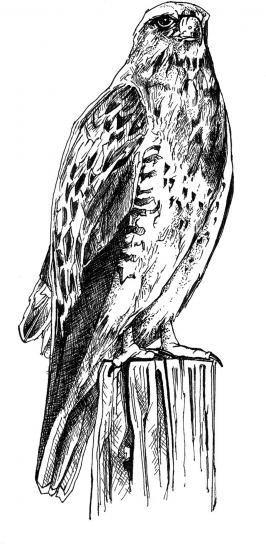 sort og hvid, linje, kunst, tegning, fugl, krop