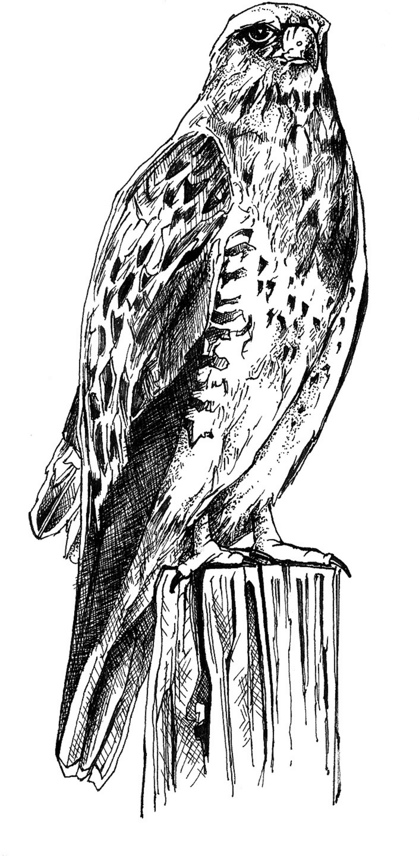Line art illustration free images public domain images black and white line art drawing bird body altavistaventures Image collections