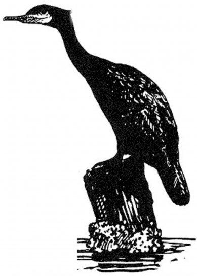 black and white, line, art, bird, water