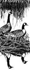 Canada geese, art, work, line, drawing