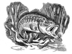 illustration, drawing, largemouth, bass, micropterus, salmoides, cattails