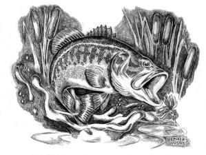 illustration, dessin, achigan à grande bouche, basse, Micropterus salmoides, quenouilles,
