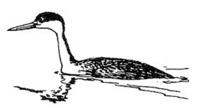 Linie, Kunst, Illustration, schwarz-weiße Vogel, Illustration