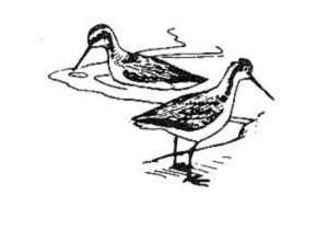 línea, arte, ilustración, negro y blanco, imagen, pájaros
