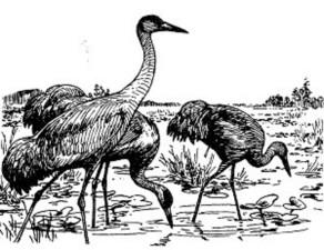 line, art, illustration, birds