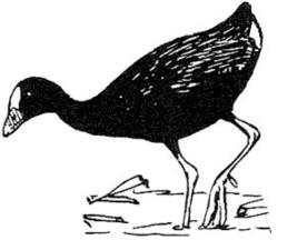 linka, umenie, ilustrácie, divoké, vták