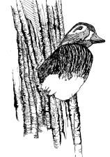 ligne, dessin, art, canard, nid