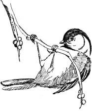 llustration, sort, udjævnet, chickadee, parus, atricapillus