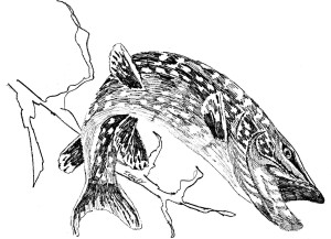 le grand brochet, poissons, esox, lucius, linnaeus, ligne, art, ligne, dessin