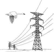 power, lines, hazard, illustration