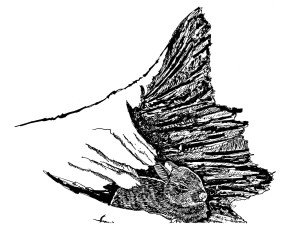 rabbit, log, illustration