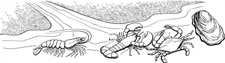 shellfish, crabs, line, art, illustration, art, work