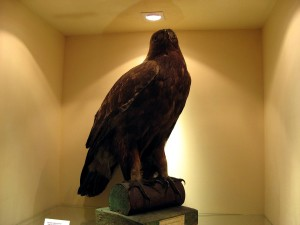 eagle, statue, museum
