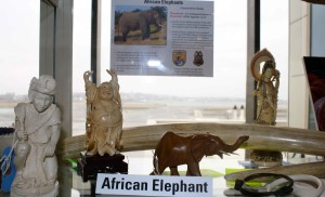 éléphant, ivoire, sculptures, art