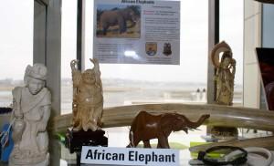 elephant, ivory, carvings, art
