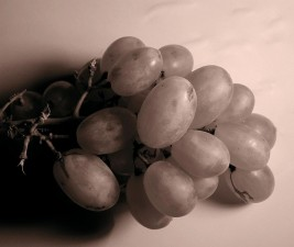 grapes, fruit, edited, image