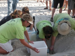 beach, volunteer, counts, eggs, hand