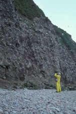 empleados, binoculares, mirada, kittiwakes, rocas
