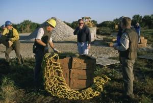 empleados, trabajo, manglares, restauración, proyecto