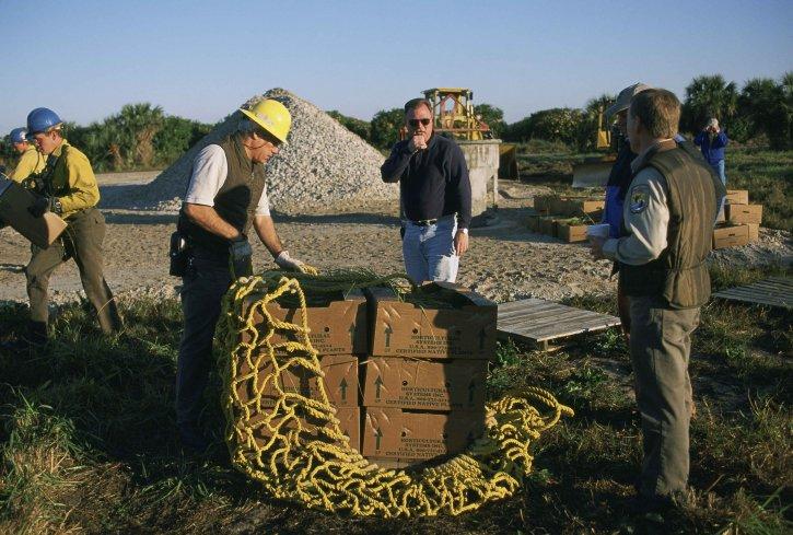 dipendenti, il lavoro, mangrovie, il restauro, il progetto