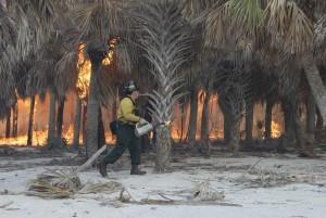 bombero, empleados, de cerca, monitores, prescrito, quemadura, palma, bosque