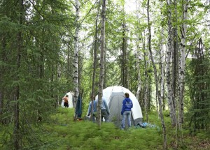 forests, science, camp, set