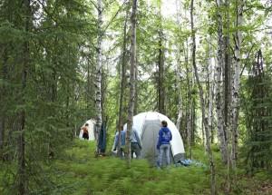 skogar, vetenskap, camp, set