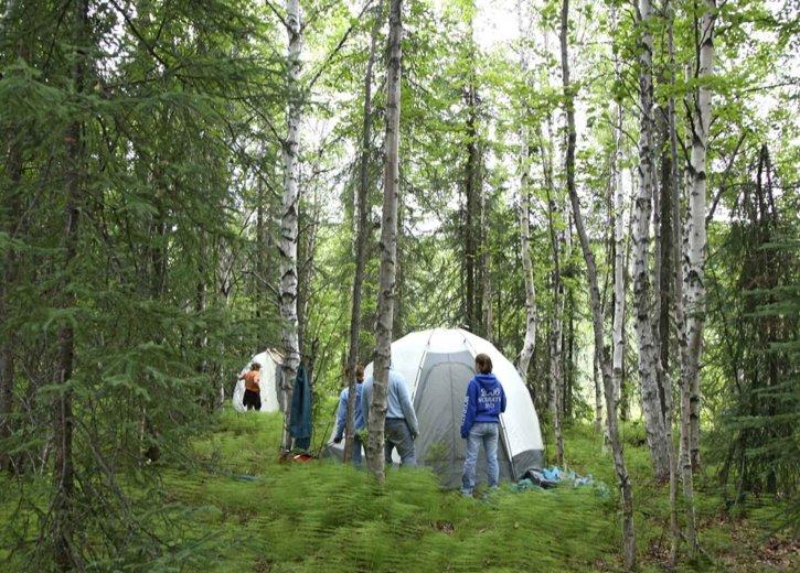 šume, znanost, kamp, skup