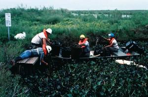habitat, restoration, oil, spill