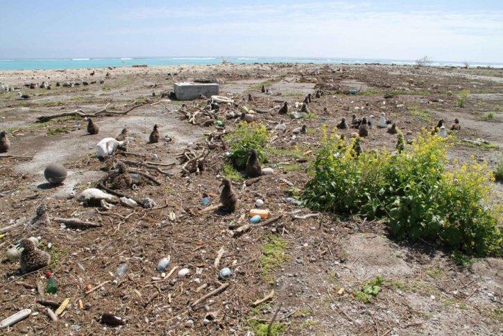 остров, цунами, генерирани, мощен, земетресение, бряг, Япония