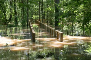 river, boardwalk, trail, inundated, water