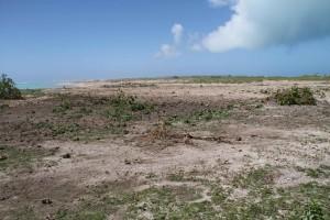 umyte, obszar, tsunami, generowany, potężny, earthquak